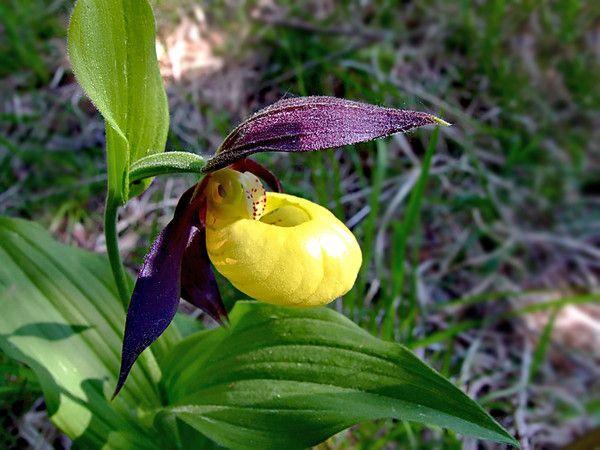 Comment Faire Secher Les Fleurs D Hortensias Centerblog