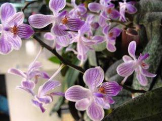les orchidees pour les nuls. Black Bedroom Furniture Sets. Home Design Ideas