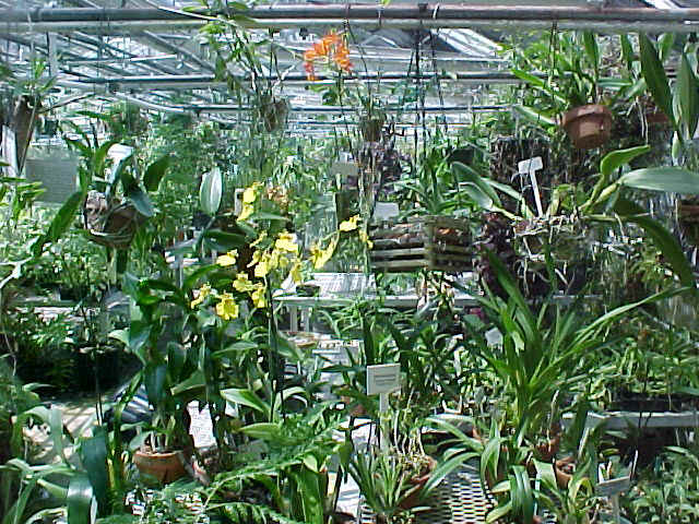 orchid es de collection en vente aujourd 39 hui. Black Bedroom Furniture Sets. Home Design Ideas