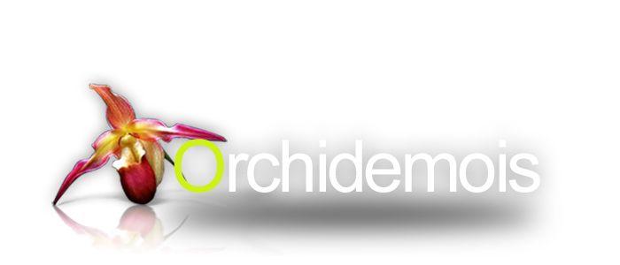 c 39 est le printemps pensez au rempotage de vos orchid es. Black Bedroom Furniture Sets. Home Design Ideas